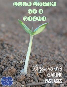 Ciclo di vita di una pianta Differenziati passaggi di lettura
