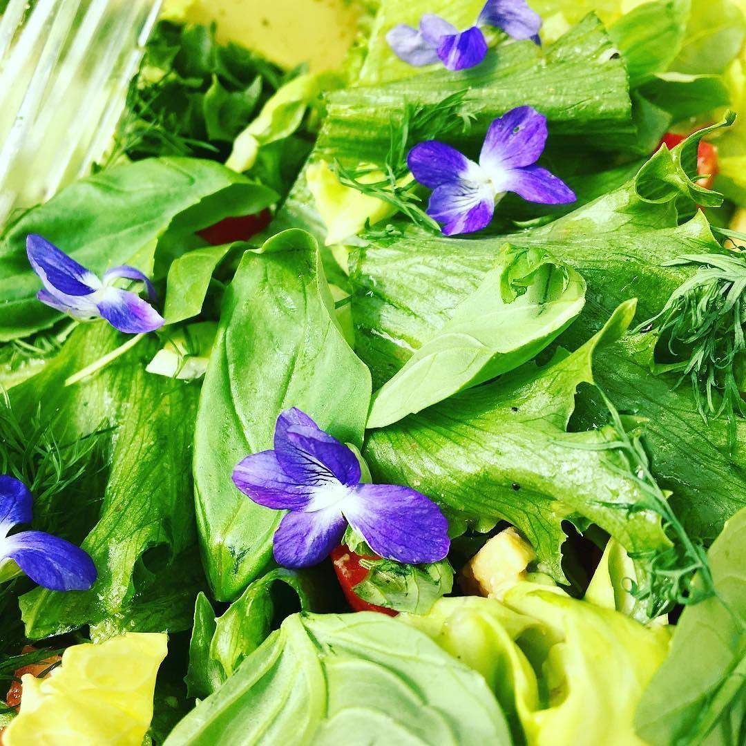Lounaaksi orvokkeja salaatilla? Kyllä kiitos! #futuremarja #foodporn #midsummer #lounas #villiyrtit #hortoilu #salaatti