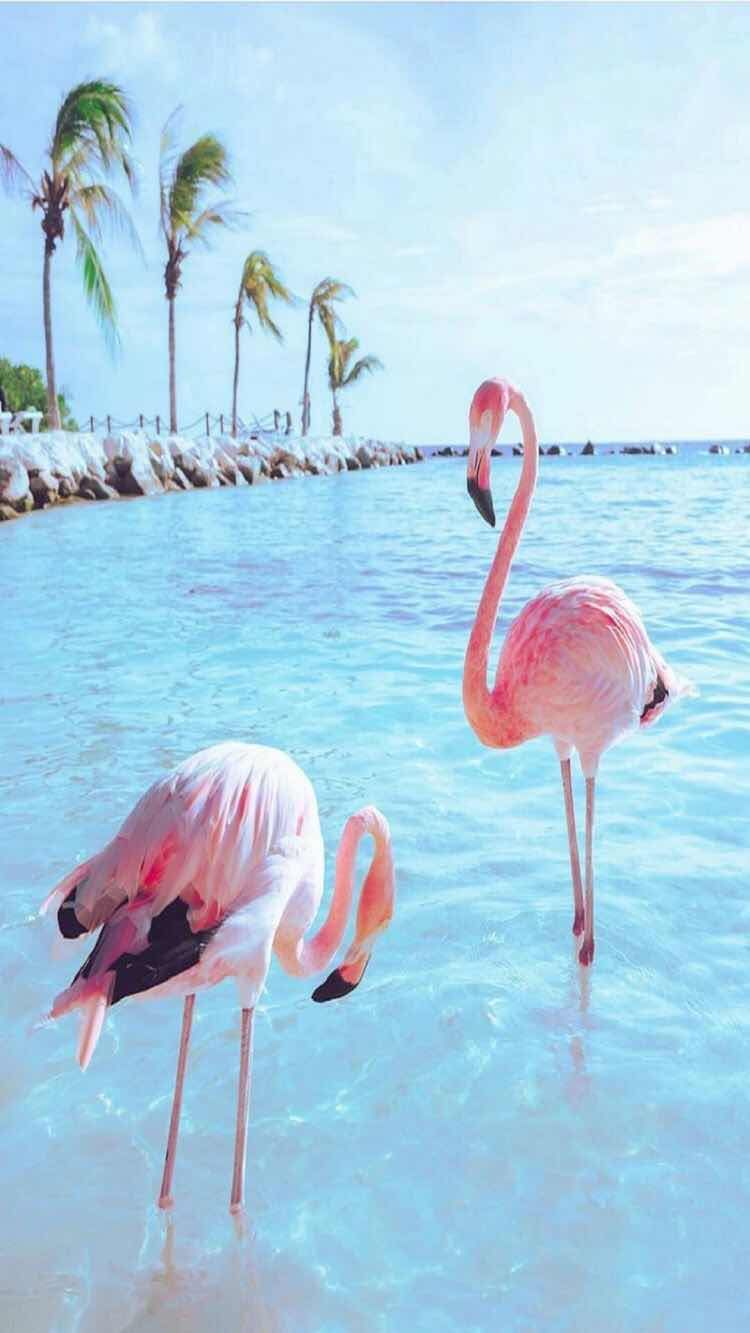 iPhone and Android Wallpapers Flamingo Bird Wallpaper for