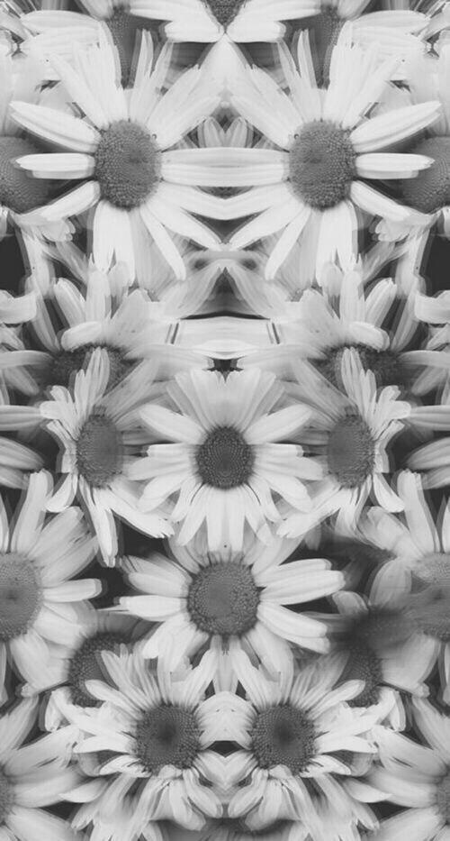 Grunge daisies iphone wallpaper