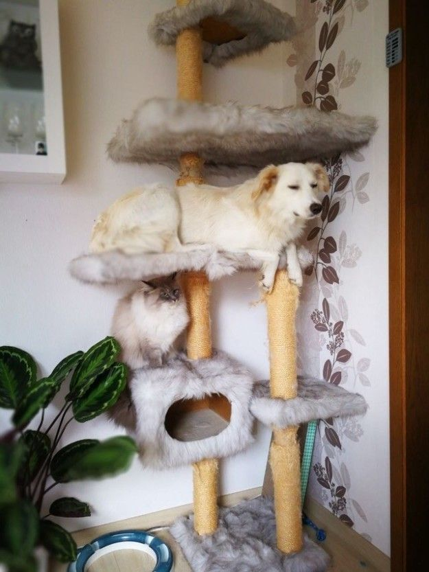 How did you even get up there, pupper?