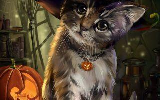 1366x768 funmozar halloween cat wallpapers. Black Halloween Cat 2021 Live Wallpaper Hd Cat Wallpaper Halloween Cat Cats