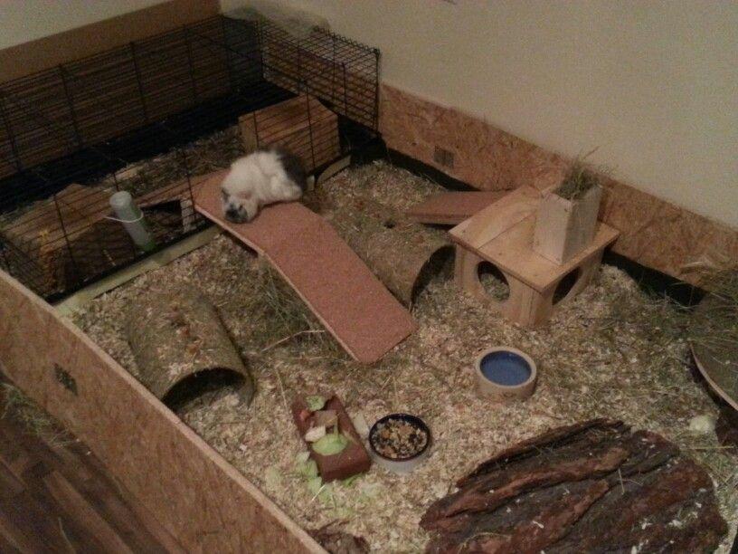 Pin auf Pet Enclosure / Cage Ideas