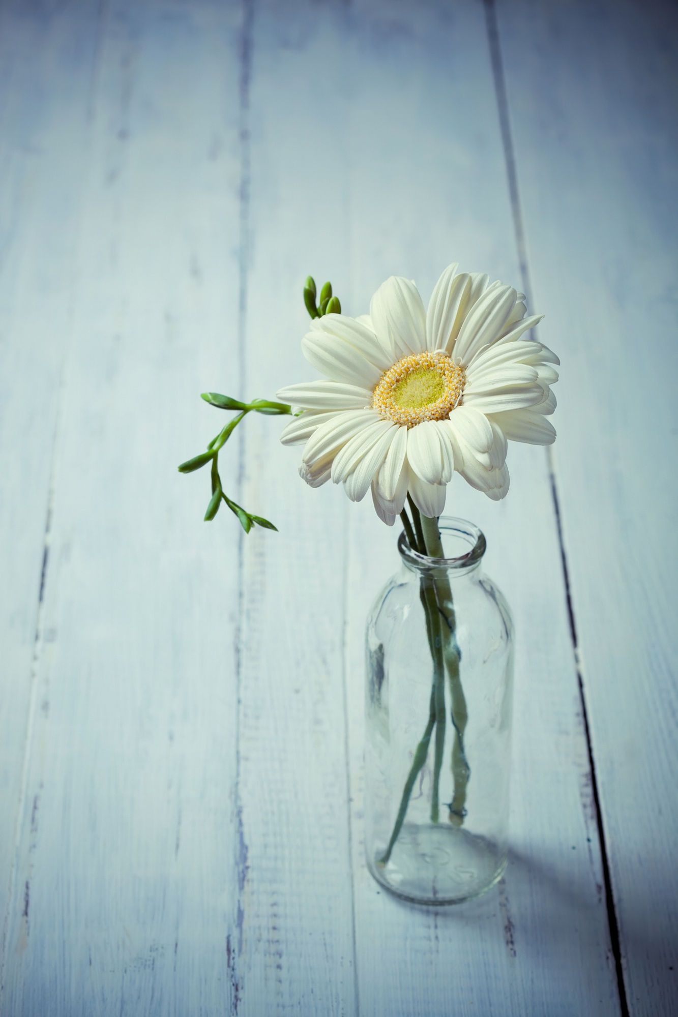 White Gerbera Flower In A Vase On Wooden Background Simple
