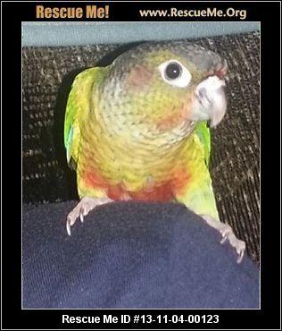 Tennessee Bird Rescue Adoptions Rescueme Org Birds Pet Birds Post Animal