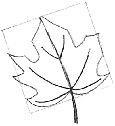 How to draw maple leaves easy leaf step by step drawing lesson how to draw step by step drawing tutorials