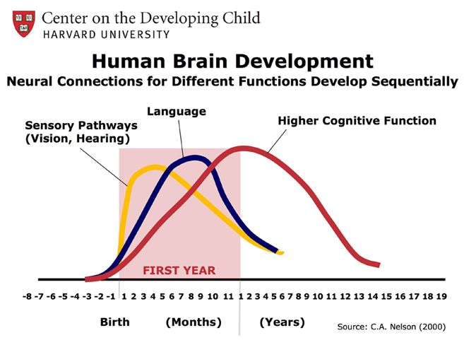 fetal humanity and brain function When does a fetus have brain activity many women sense or feel the first fetal movements in the 5th and both the same time but the brain functions before the.