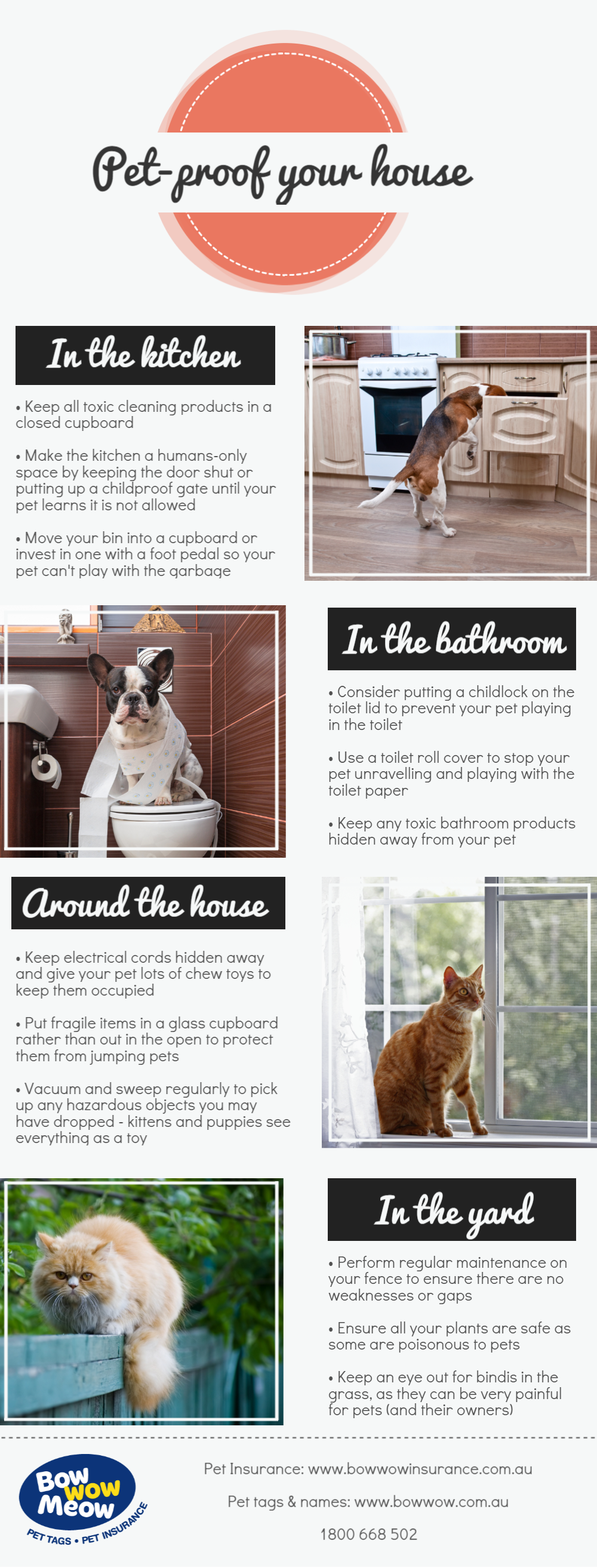 How to petproof your house dogs cats www