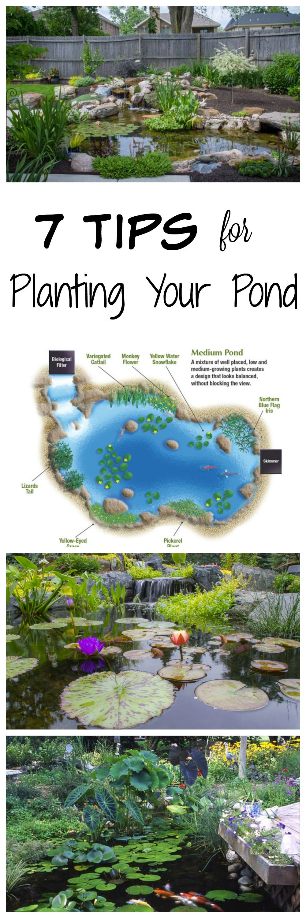 7 tips for planting your pond backyard plants and gardens