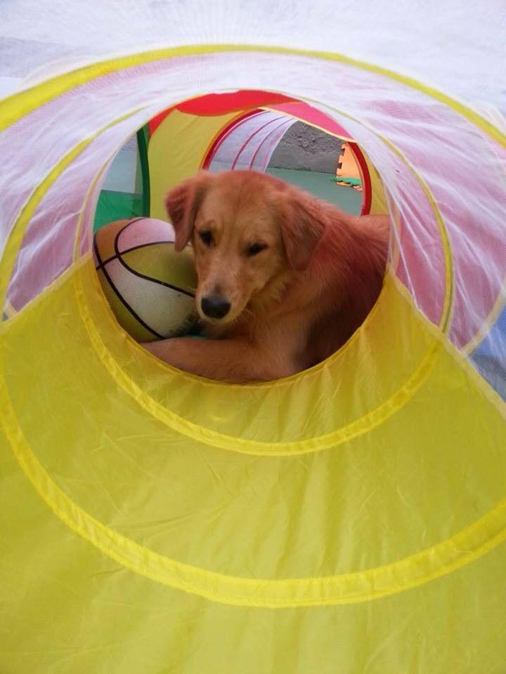 Essa bola é minha!