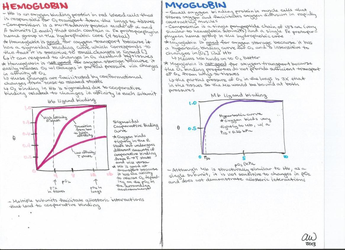 medium resolution of hemoglobin and myoglobin