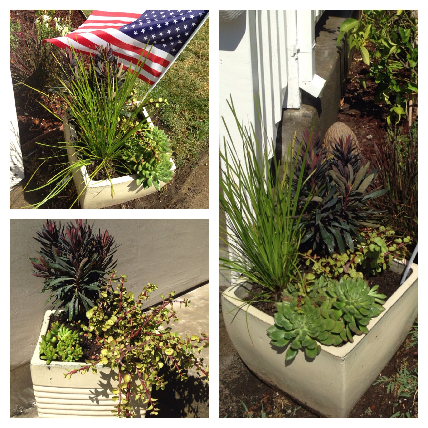 Elegant Drought tolerant Plants for Pots