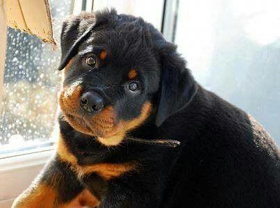 #ilovemydoggy #dogsruletheworld #dogsmakeeverythingbetter#bestdogever#bestdogontheplanetearth #bestdogintheworld