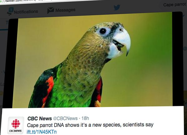 Image: Cape Parrot DNA New Species? Study Finds Bird Could Be in Its Own Group
