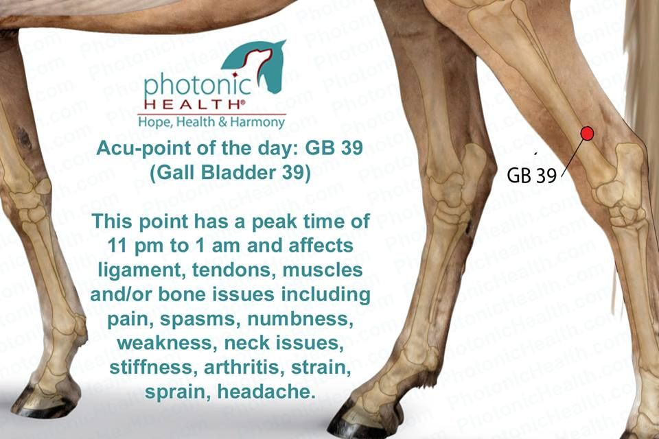 Pin by Rebecca Meister on Vet tech love | Equine massage