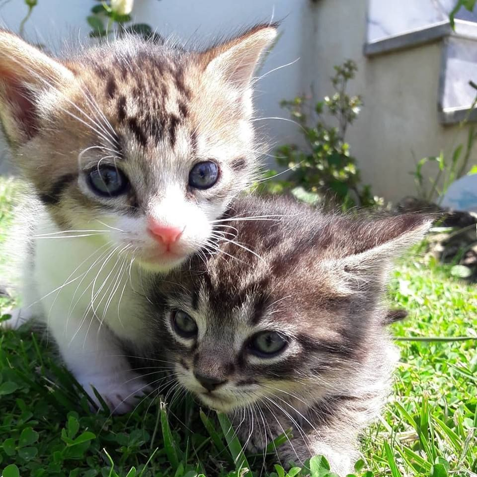 1 Month Old Kitties By Ipeacefaapp What You Think About Kittens Cutest Cute Cats And Kittens Cute Animals