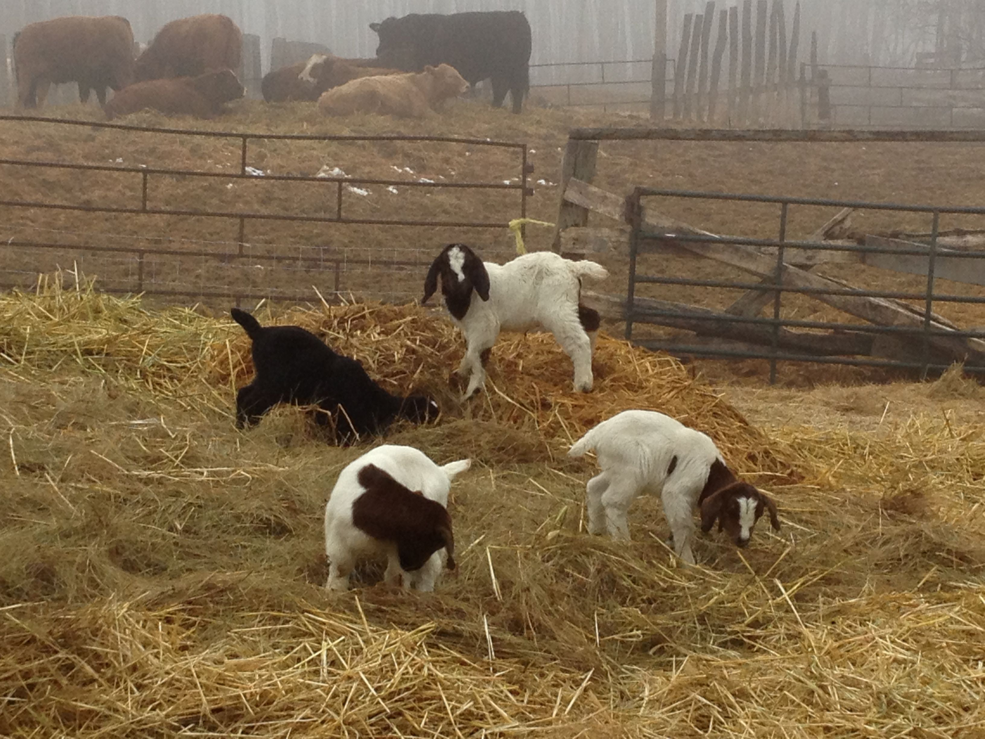 Kids enjoying foggy day (With images) Animals, Farm