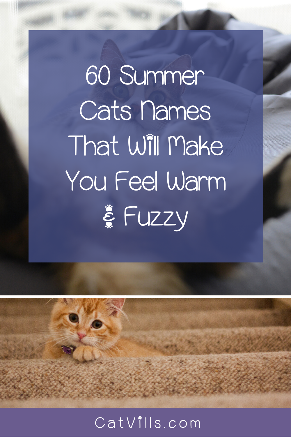 60 Summer Cat Names That Will Make You Feel Warm Fuzzy In 2020 Cat Names Funny Cat Memes Cats