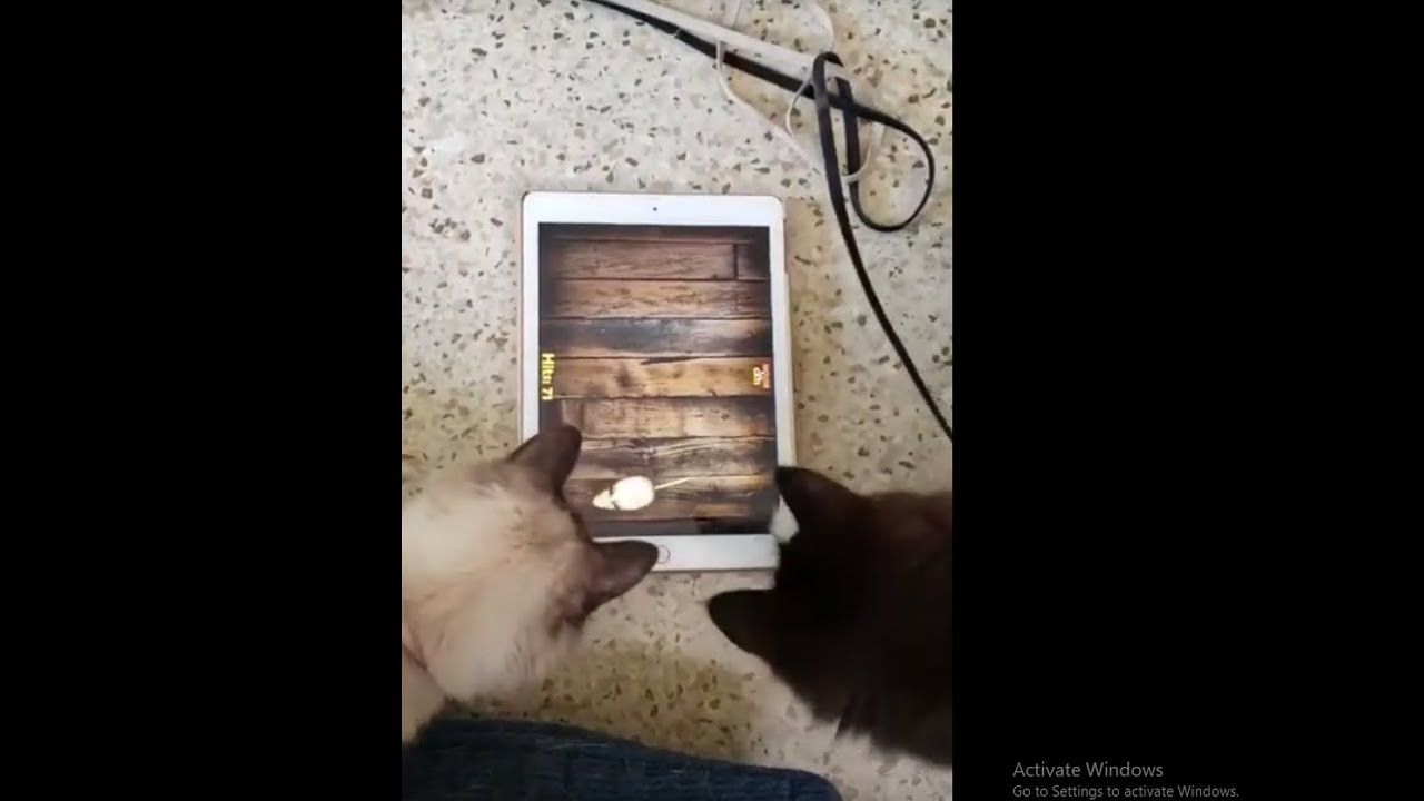 Cat Mouse Ipad Challenge Funny Cat Video Mouse For Cats Funny Cat Videos Challenges Funny Cat Mouse