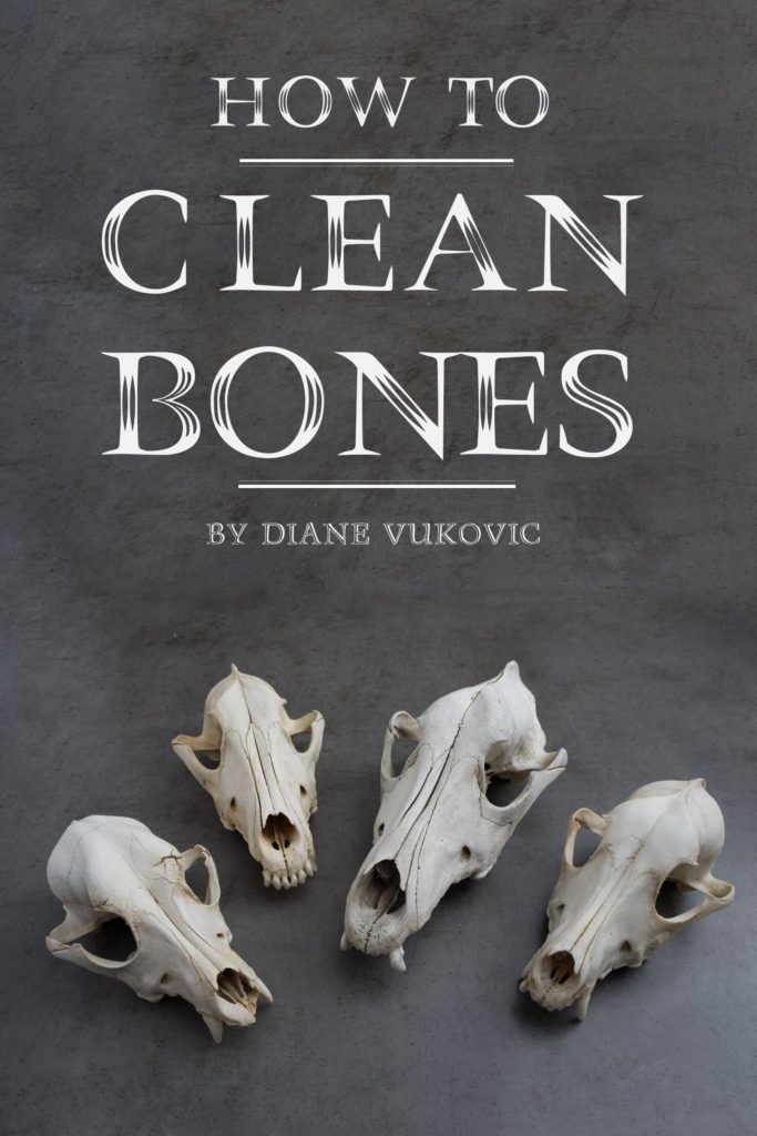 How To Clean And Whiten Animal Bones Step By Step With Pictures Mom Goes Camping Window Cleaning Tips Bathroom Cleaning Hacks Cleaning Hacks