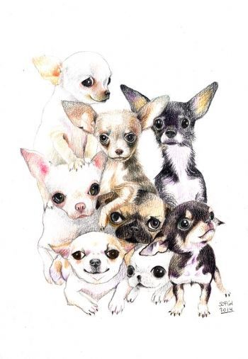 dibujo de chiguagua. Sofía Martinez | Chihuahua | Pinterest ...