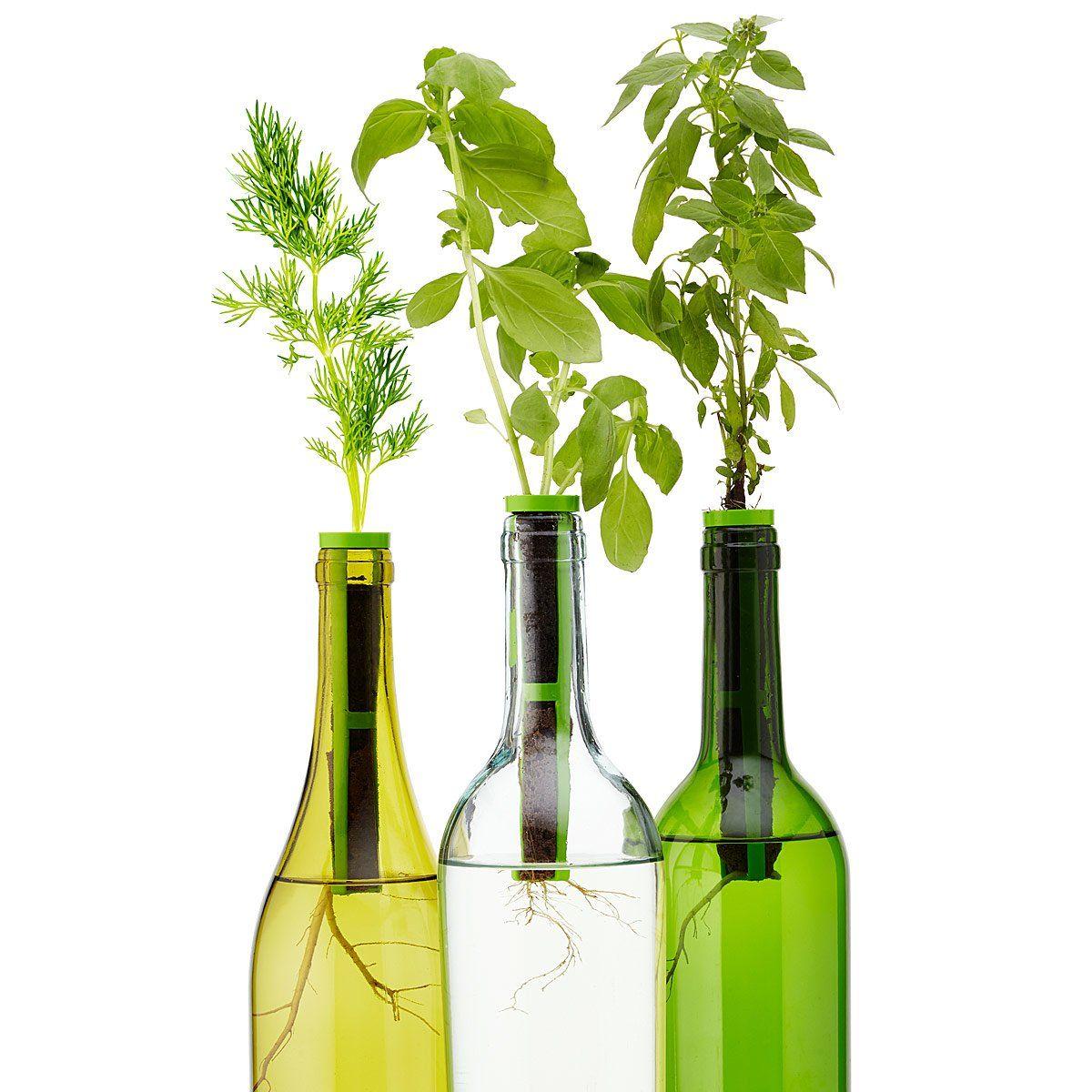 Bottle Stopper Garden Kit Indoor Garden Kit Gifts For Foodies