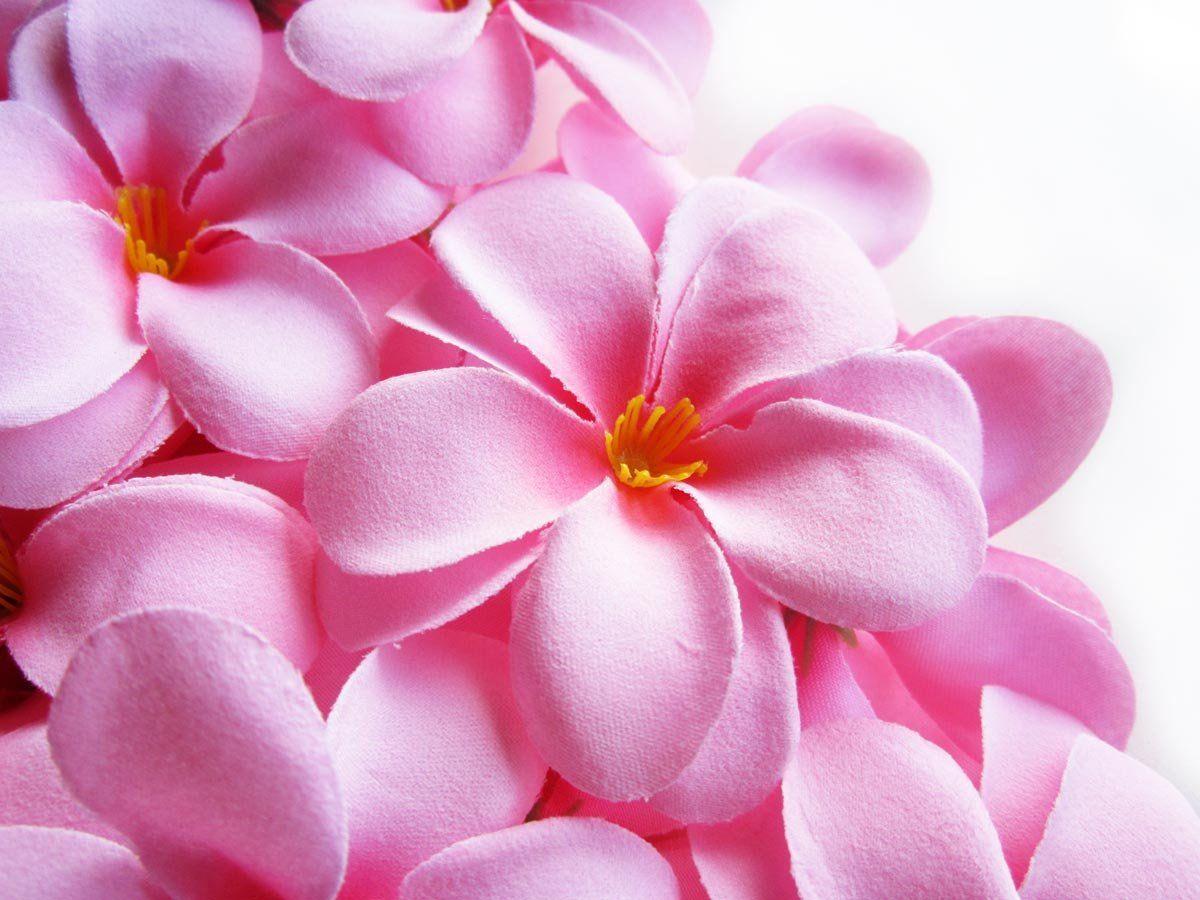 12 pink hawaiian plumeria frangipani silk flower heads 3 pink hawaiian plumeria frangipani silk flower heads artificial flowers head fabric floral supplies wholesale lot for wedding flowers accessories make izmirmasajfo