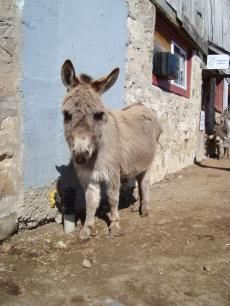 Princess | The Donkey Sanctuary