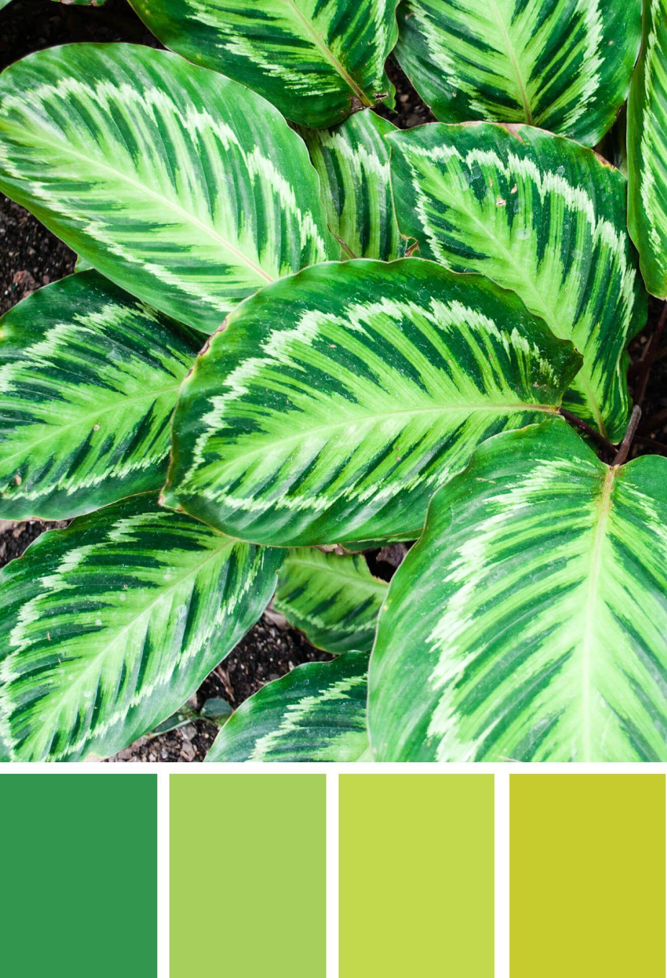 Color Inspiration A New Leaf