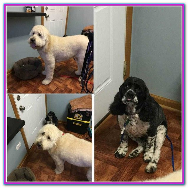 Dog Grooming Certification Ct Acquiring The Job Of A Dog Groomer