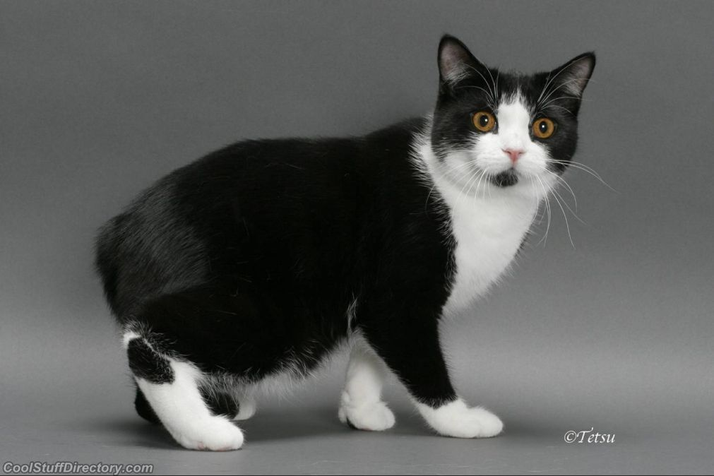 20 Of The World S Most Expensive Cat Breeds Costing Up To