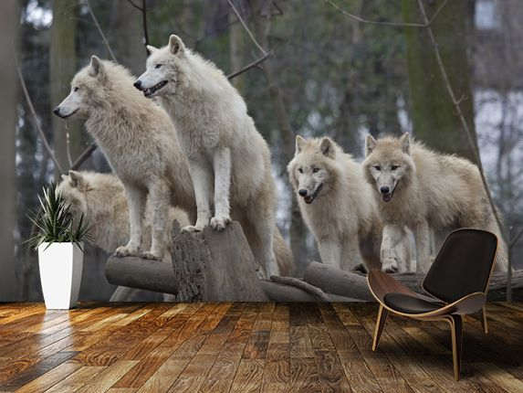 wolf wallpaper mural  Arctic Wolves | Wolves | Pinterest | Arctic wolf, Wall murals and Wolf