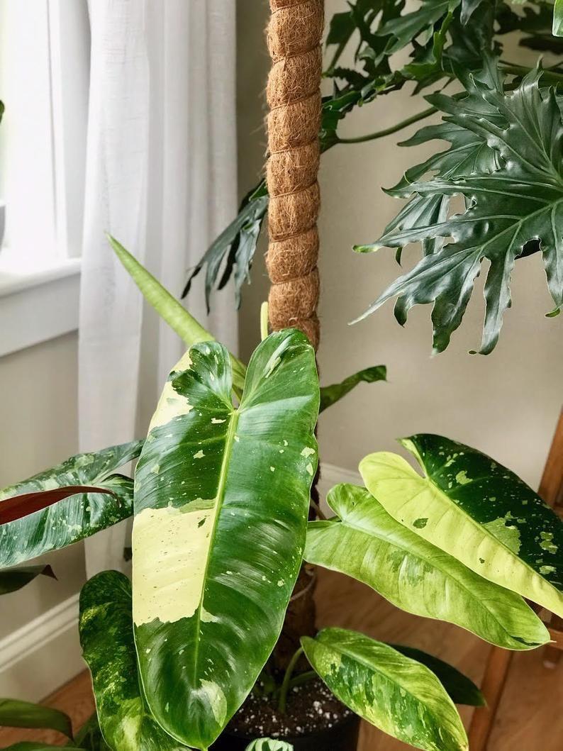 Coco fiber plant climbing pole handmade 1 2 3 etsy in