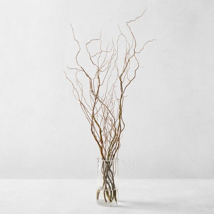 Curly Willow Branches | Williams Sonoma