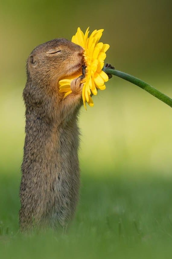 This Photographer Took Pictures of a Squirrel Smelling Flowers, and, Welp, Now I Love Squirrels