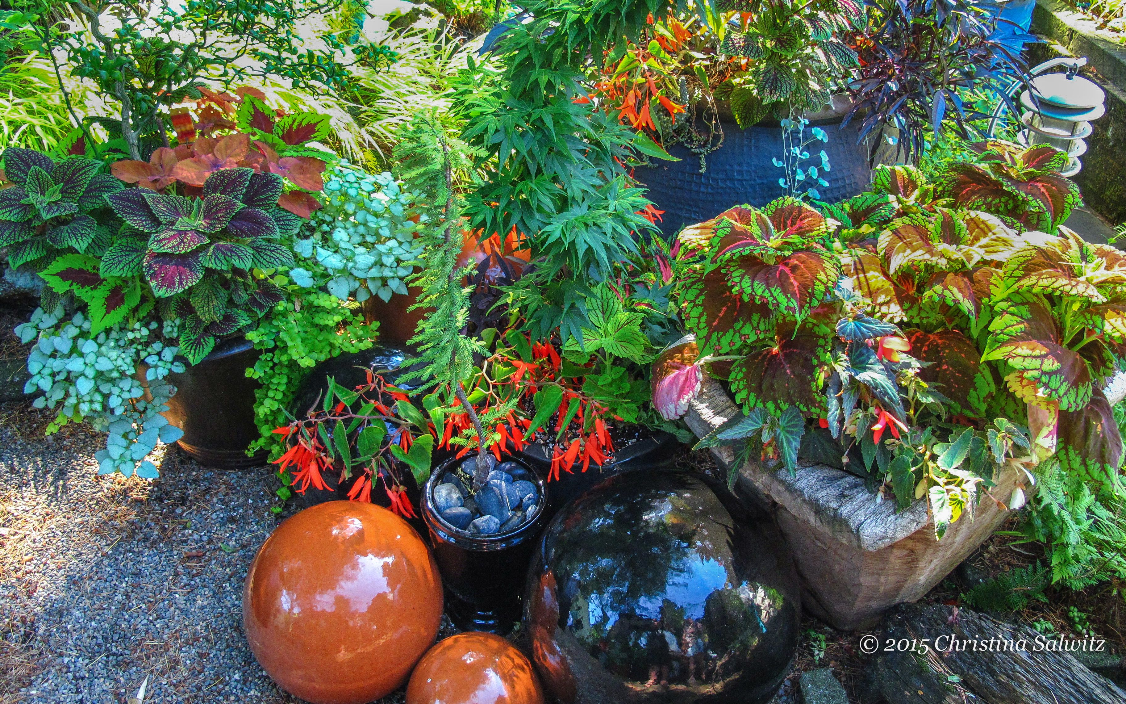 Coleus stars in this grouping of shade containers