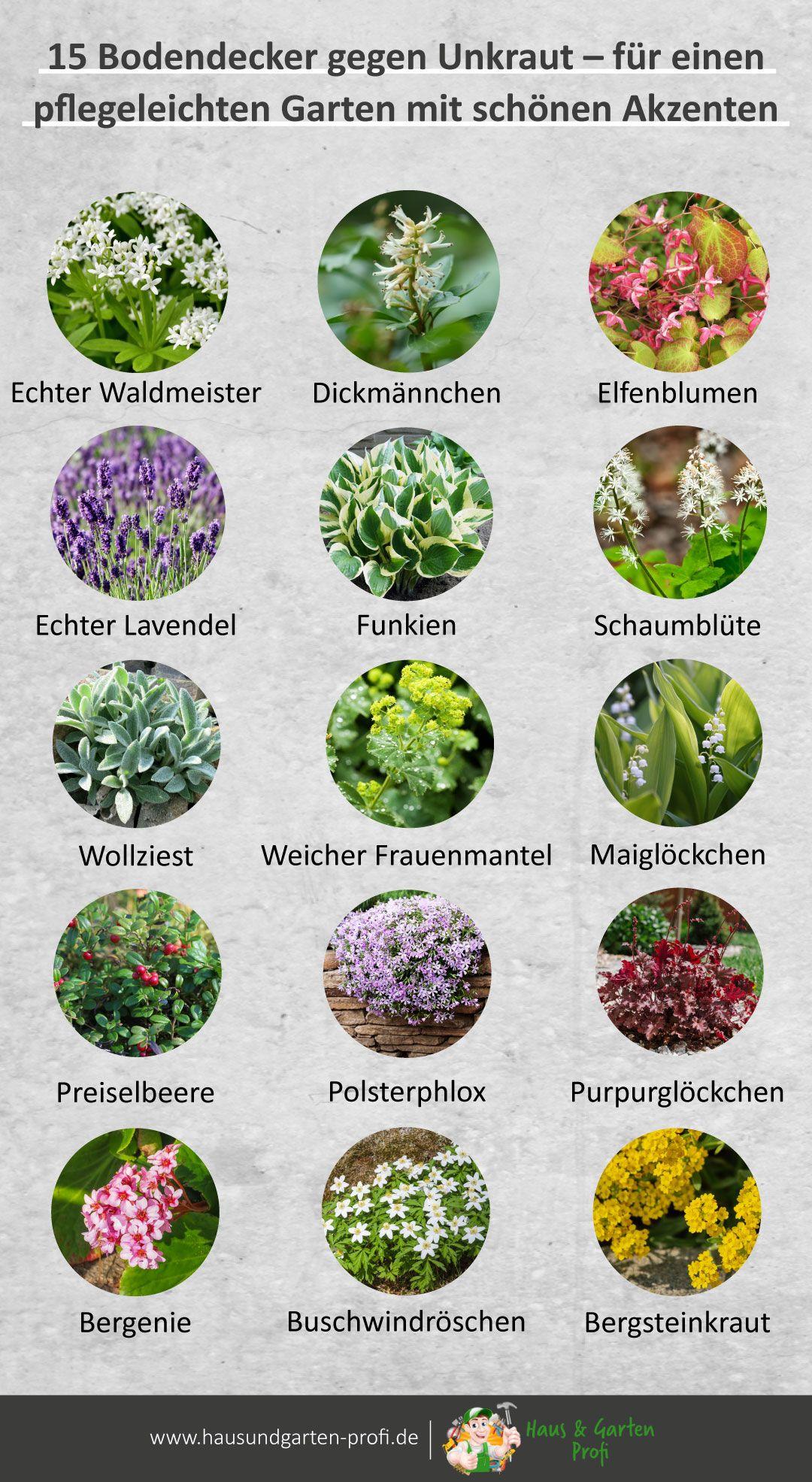 15 Bodendecker gegen Unkraut – für einen pflegeleichten Garten mit schönen Akzenten