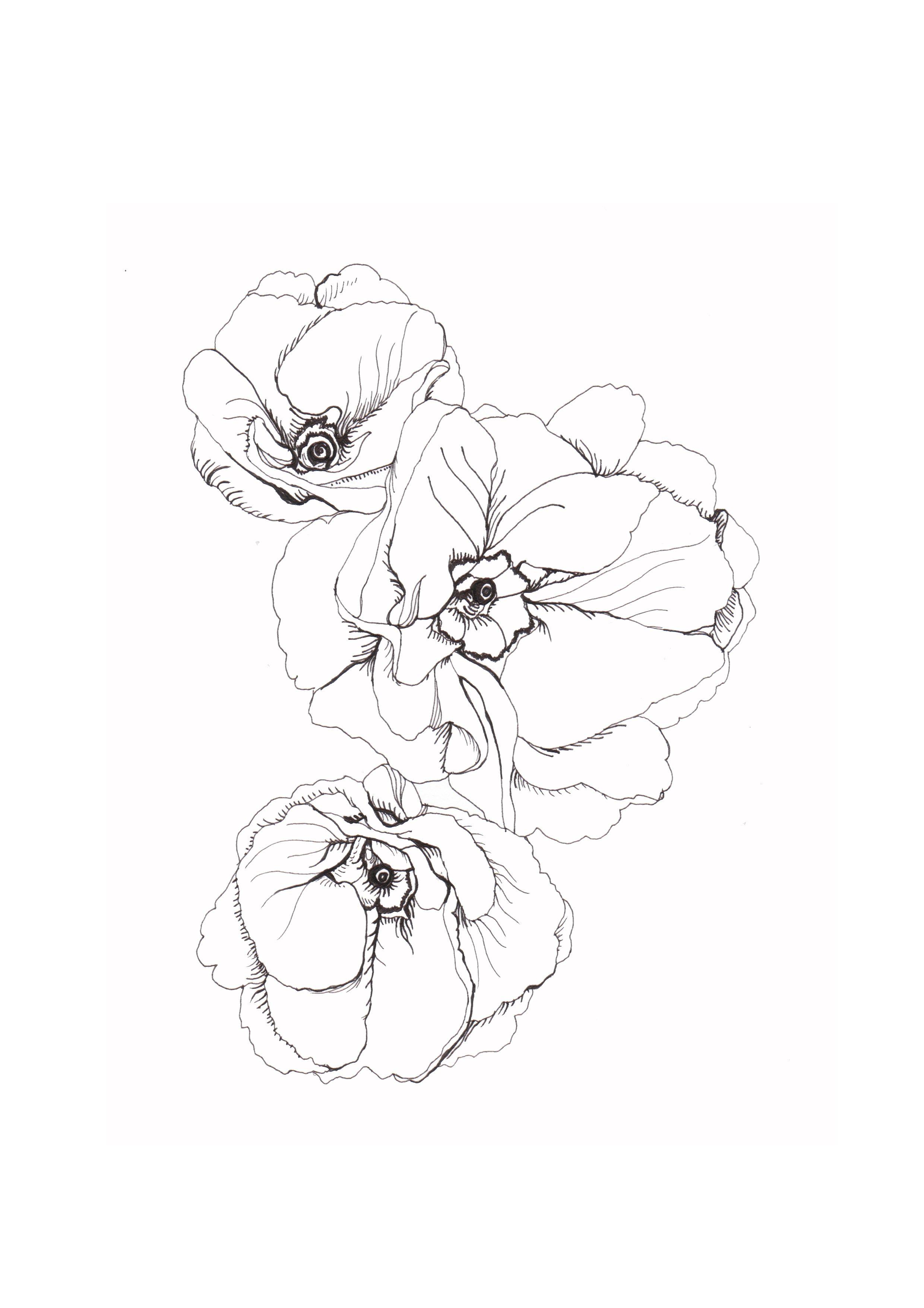 Fine Lines Flower Line Drawings Poppy Flower Drawing Flower Drawing
