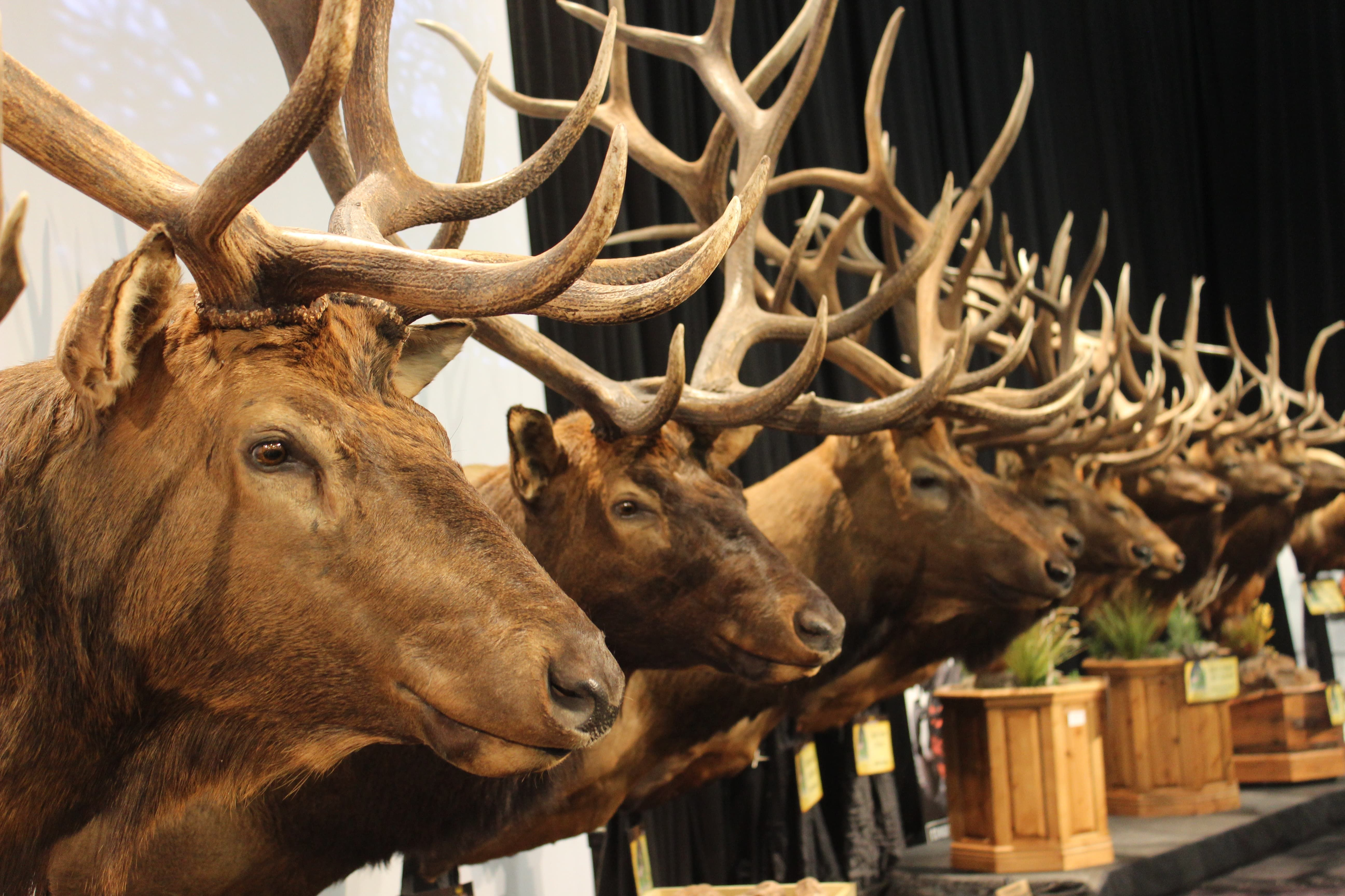 9th annual Western Hunting and Conservation Expo