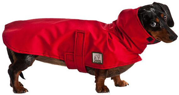 Miniature Dachshund Dog Rain Coat Raincoat Rain Slicker