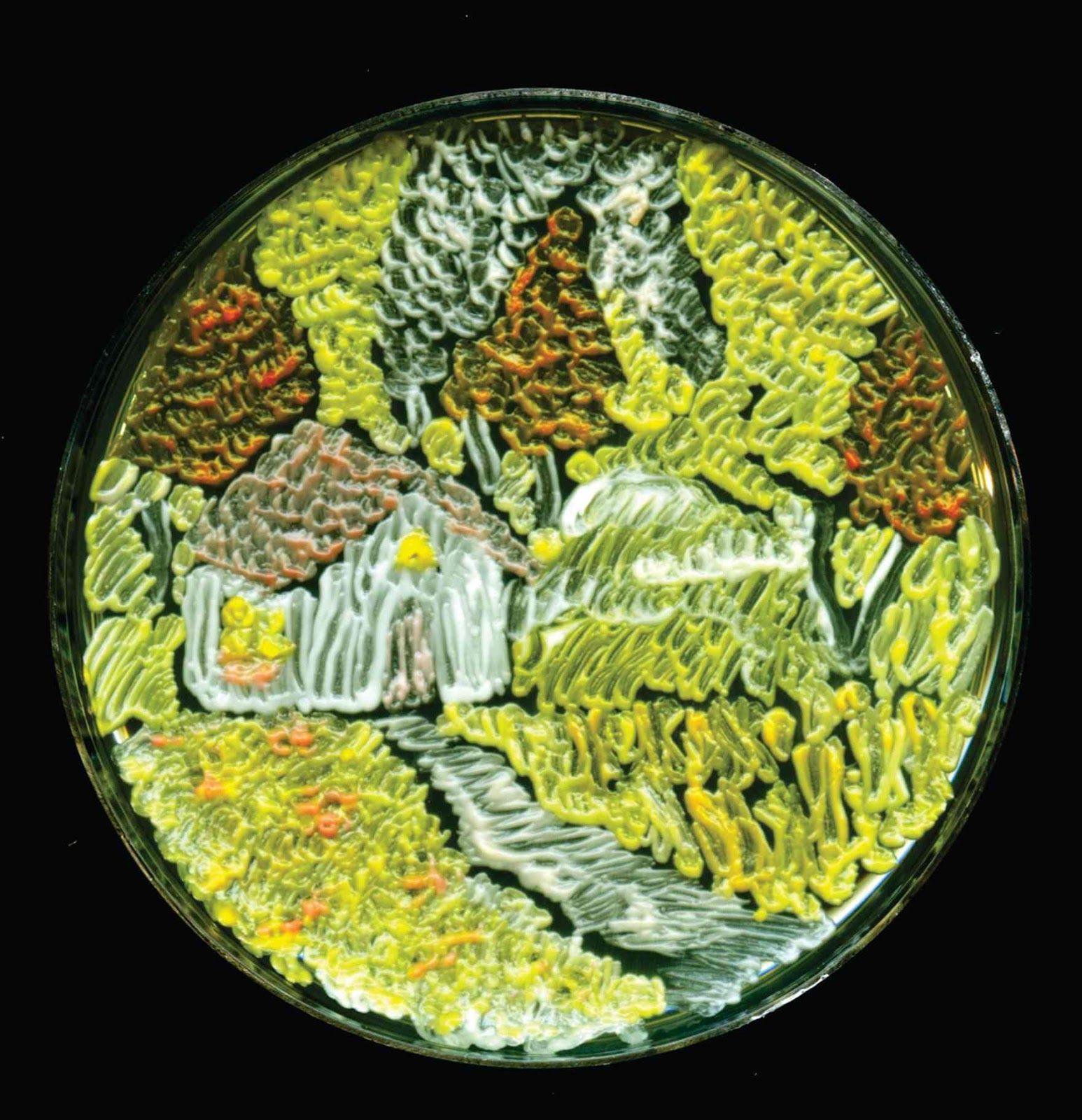 Art et Sciences #7 Microbial Art et art bactérien : des œuvres d'art dans des boites de Pétri ~ Sweet Random Science