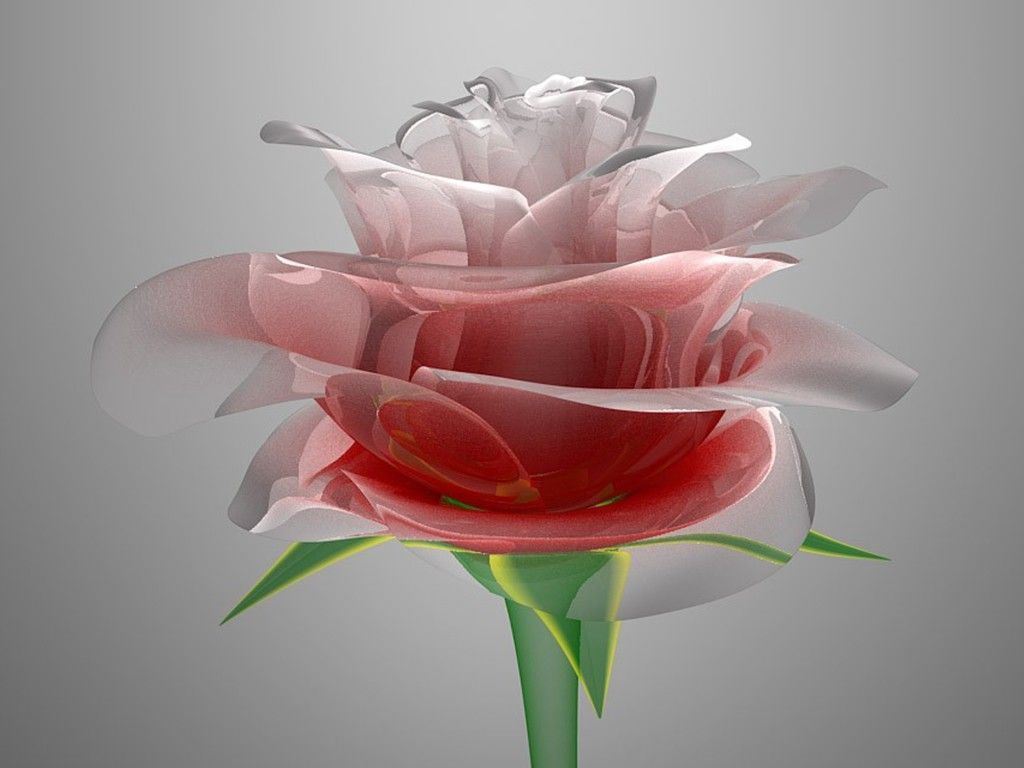 Full hd latest wallpaper for fb dp wallpapers android - Flower wallpaper dp ...