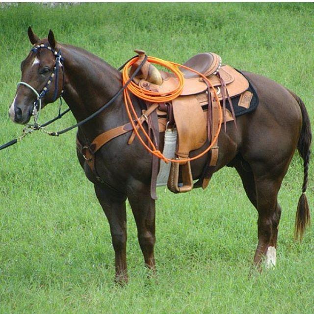 Instagram media by aficionacaballo caballo de lazo for Sillas para vaqueria