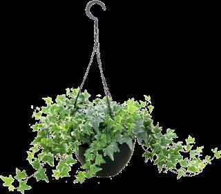 ZOOM DISEÑO Y FOTOGRAFIA: plantas colgantes para tus jardines en png