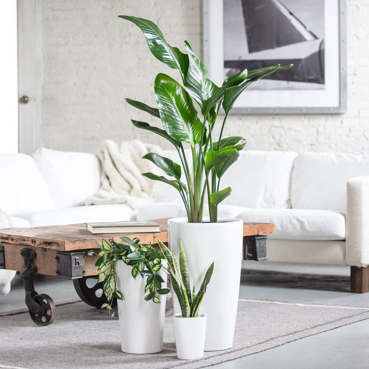 Plant Delivery Nyc Indoor