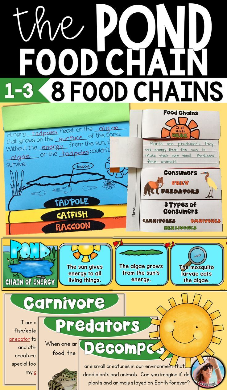 Pond Food Chain Activities Food chain activities