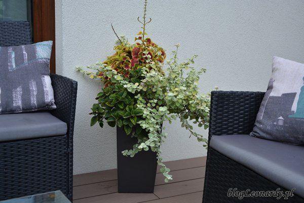 Kompozycje Tarasowe W Donicach Flower Pots Planter Pots Go Green