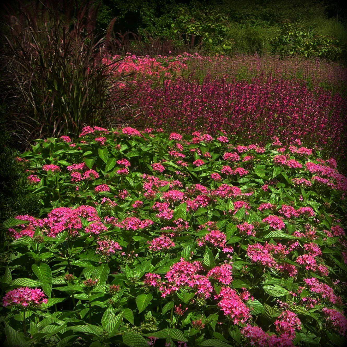 Longwood Gardens, by Ellen LoCicero | Gardens | Pinterest | Longwood ...