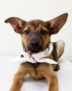 Meet Rachel, an adoptable Terrier looking for a forever home. If you're looking…