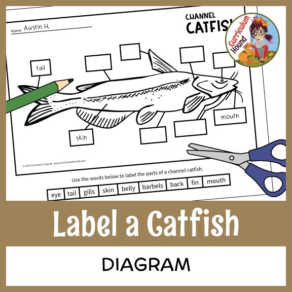 label a fish diagram - parts of a fish labeling - channel catfish ...  pinterest